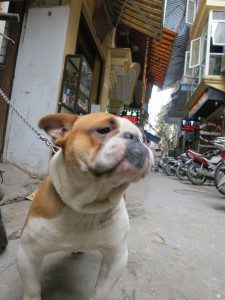 Center of Ha Noi. Unfortunately, some in Vietnam still eat dog. This was a pet.